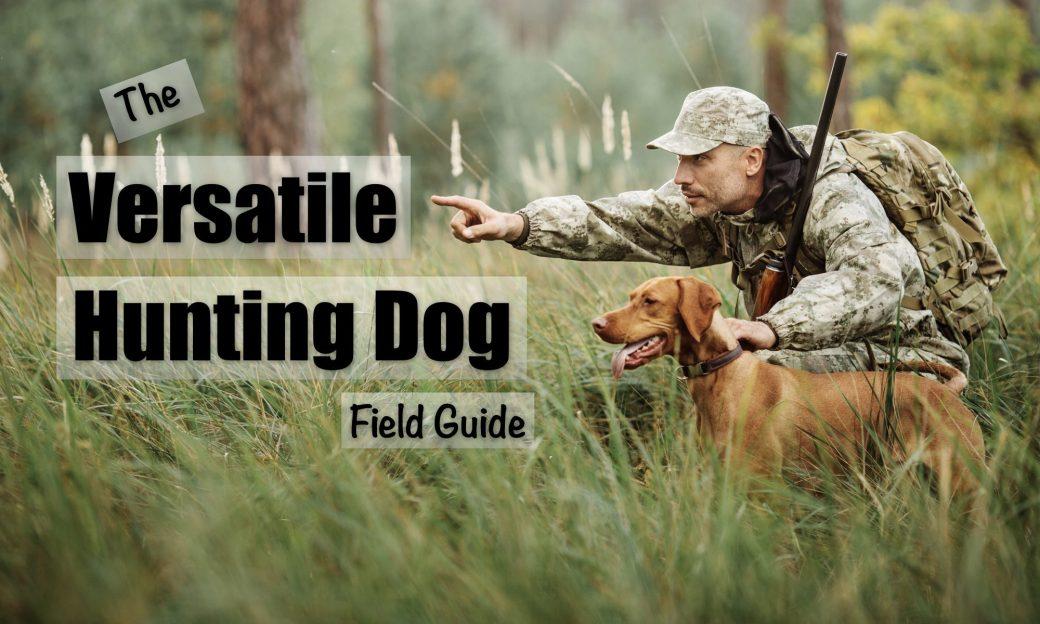 cropped-20180720fr1702-versatile-hunting-dog-header-title-2000x1200.jpg